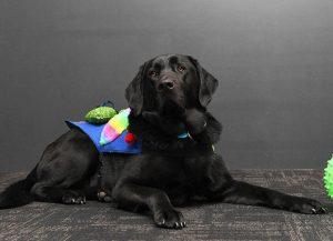 Kites Therapy Dog Grady